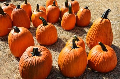 pumpkins-1592895_640