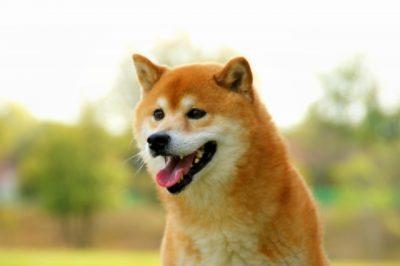 志村動物園 「日本犬の里」の場所は知らない方が良い?!