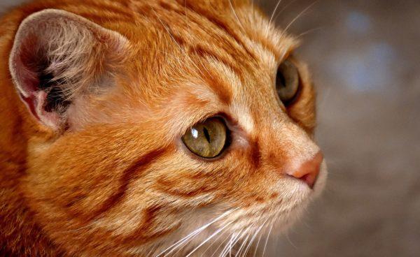 えなこりんの飼い猫の名前や種類は?SNSの写真でいつも寝てるのは何故?