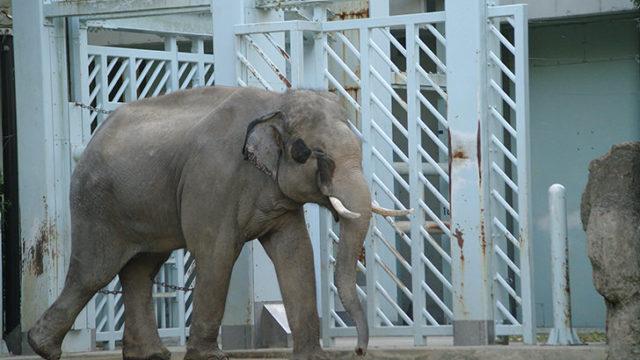上野動物園の管理