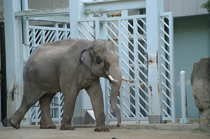 上野動物園を管理するのは誰?開園記念日(3月20日)のイベントは?