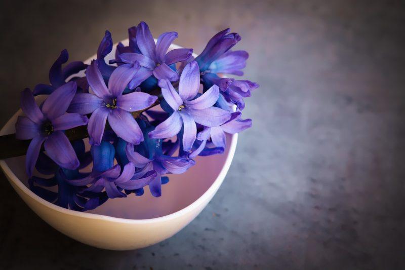 ヒヤシンスの花言葉
