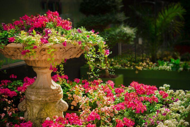 植物園の日