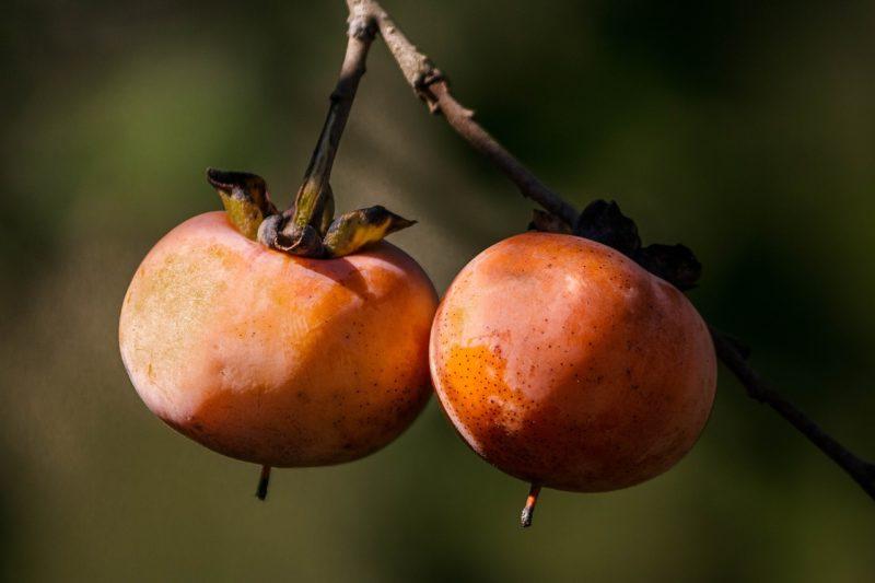 柿の花言葉